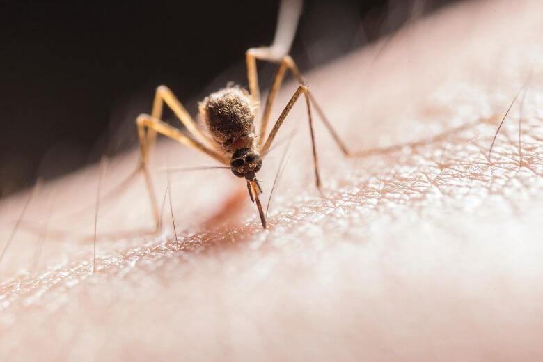 Tips-musquito-bites.